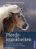 Pferdekrankheiten: Von Abszess bis Zahnstein