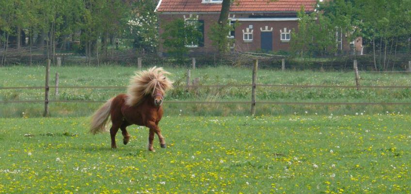 ponyweglaufen